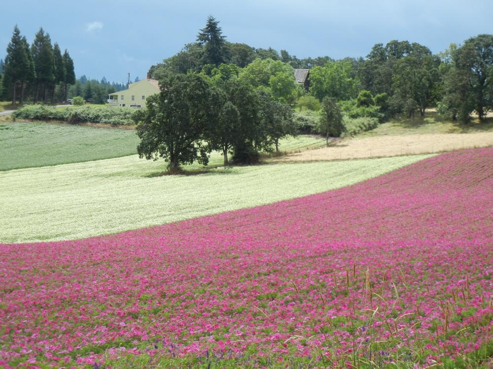 Fields in bloom