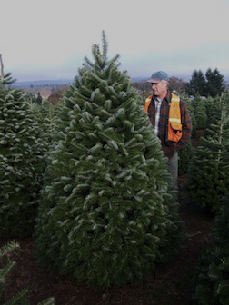 Oregon Christmas Trees.Christmas Tree Resources At Oregon State University