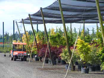 Nursery plants with shade cloth