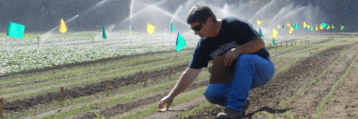 Ed Peachey studying weed emergence