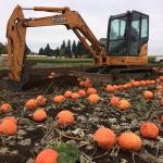 Aaron  L. Heinrich in the pumpkin patch