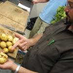 Dr. Mario Ambrosino grading potato tubers.