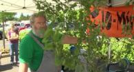 Master Gardener 10 Minute University-Pruning