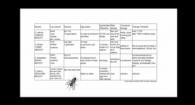 Buckland cabbage maggot presentation