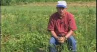 Organic High Residue Reduced-Till Potato Production: Weed Em and Reap