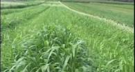 Organic High Residue Reduced-Till Intro: Weed Em and Reap