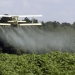 Oregon researchers are exploring alternatives to chlorpyrifos, but they say they do not have sufficient funding to do the work. Photo: Associated Press File.