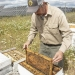 John Jacob, beekeeper and owner of Old Sol Apiaries, pulls a panel out of one of his honey bee hives next to a row of solar panels.  Sierra Dawn McClain/Capital Press File