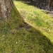 Moss thrives in moist, shady situations on compacted soil, common conditions in the western areas of Oregon.Kjerstin Gabrielson/Staff