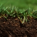 A healthy lawn needs about an inch of water a week, but not all at once. OSU Extension Service