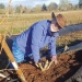 Dr. Bernadine Strik of Oregon State University has spent more than 14 years working on blueberry trials to uncover best mulching practices. Photo courtesy of Oregon State University
