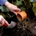 Midsummer is a good time to fertilize your vegetable garden.OSU Extension Service