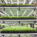Vertical shelves of microgreens at Forward Greens in Vancouver, Wash.