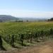 A vineyard in Oregon's Eola Amity Hills AVA at harvest.