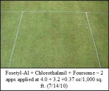Picture: Fosetyl-Al + Chlorothalanil + Foursome – 2 apps applied at 4.0 + 3.2 +0