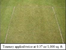 Picture: Tourney applied twice at 0.37 oz/1,000 sq. ft.