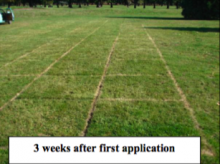2007 Evaluation of One and Two Fall Applications of Various Herbicides for the C